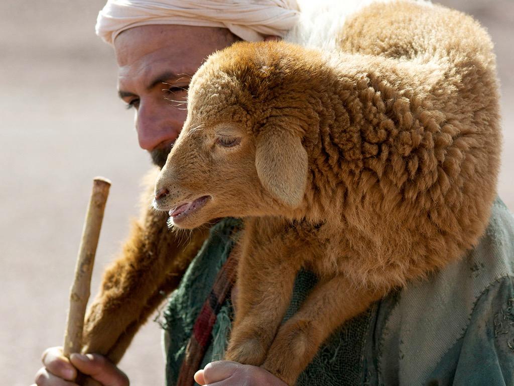 Pan jest pasterzem moim (Ps. 23)